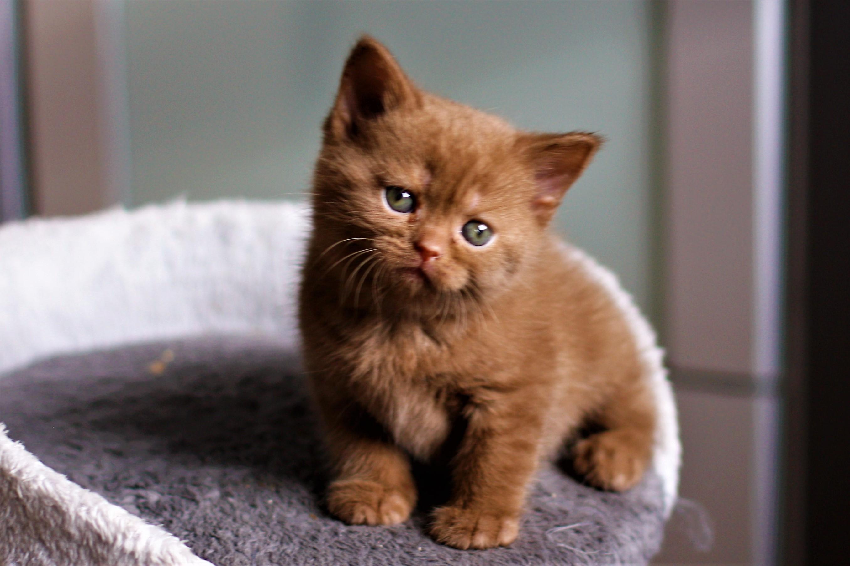 almiras kitten (9)
