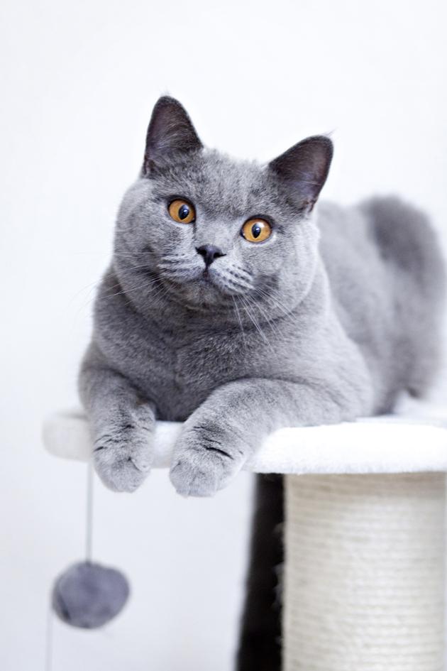 ILFC cats_0033
