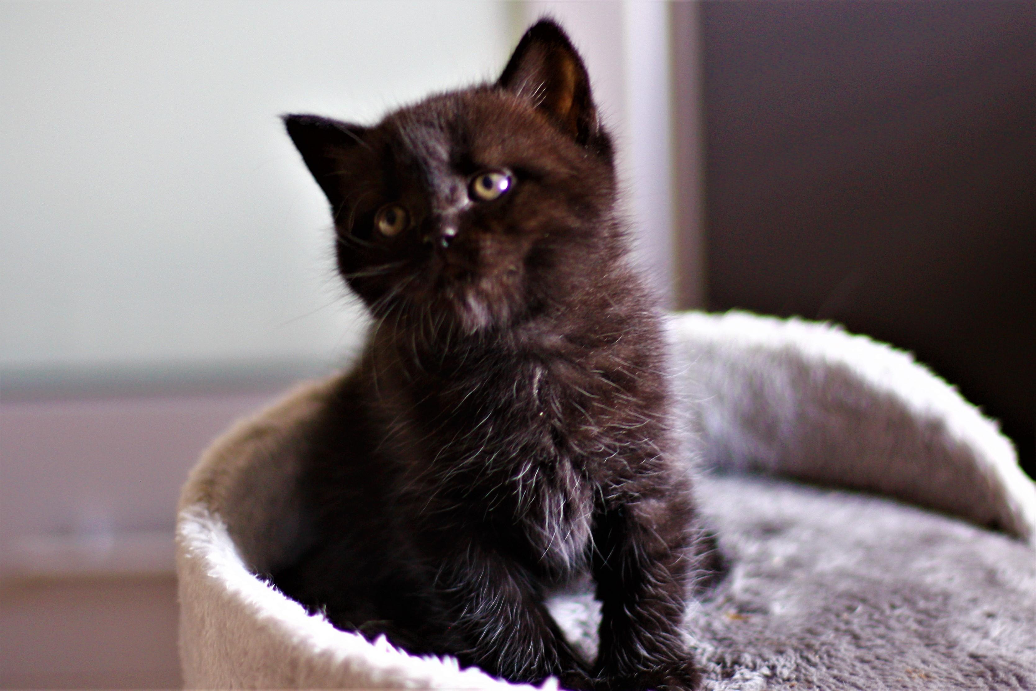 almiras kitten (19)