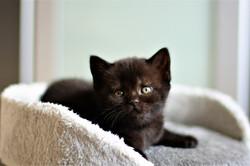 almiras kitten (4)