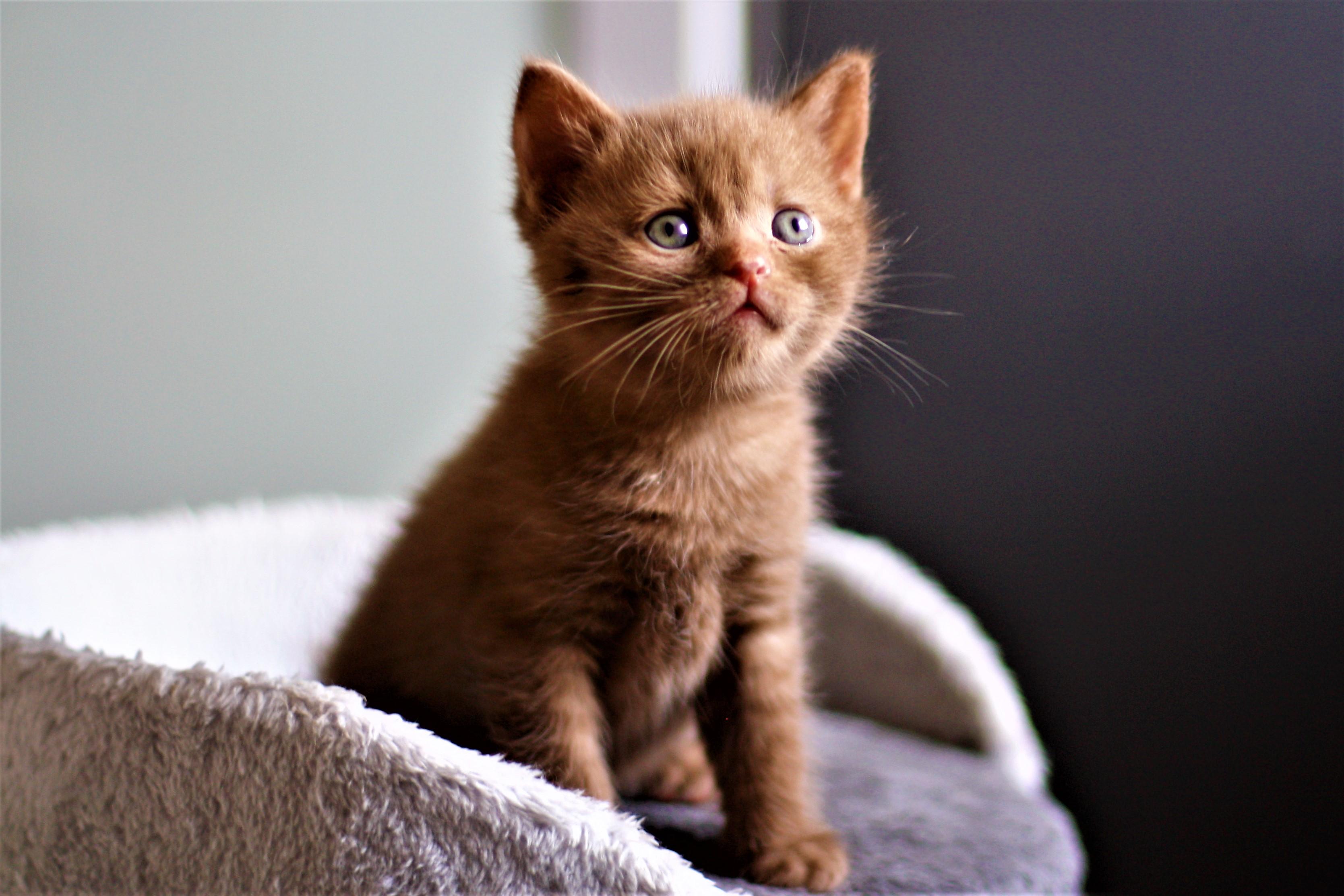 almiras kitten (5)