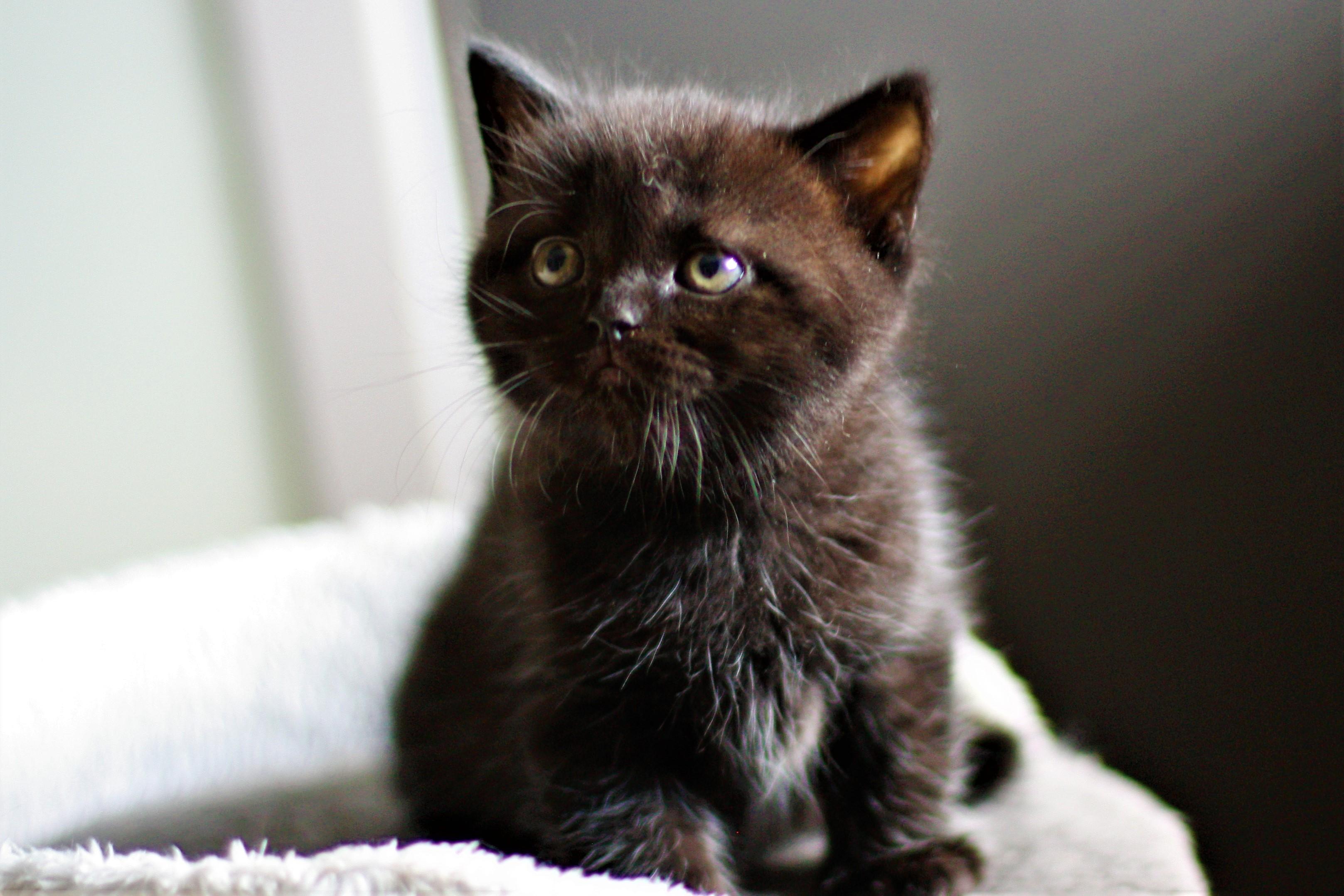 almiras kitten (20)