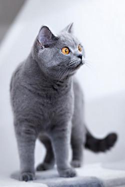 ILFC cats_0127