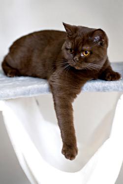 ILFC cats_0544