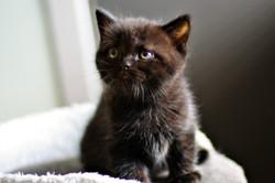 almiras kitten (16)