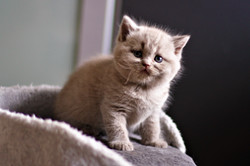 almiras kitten (13)