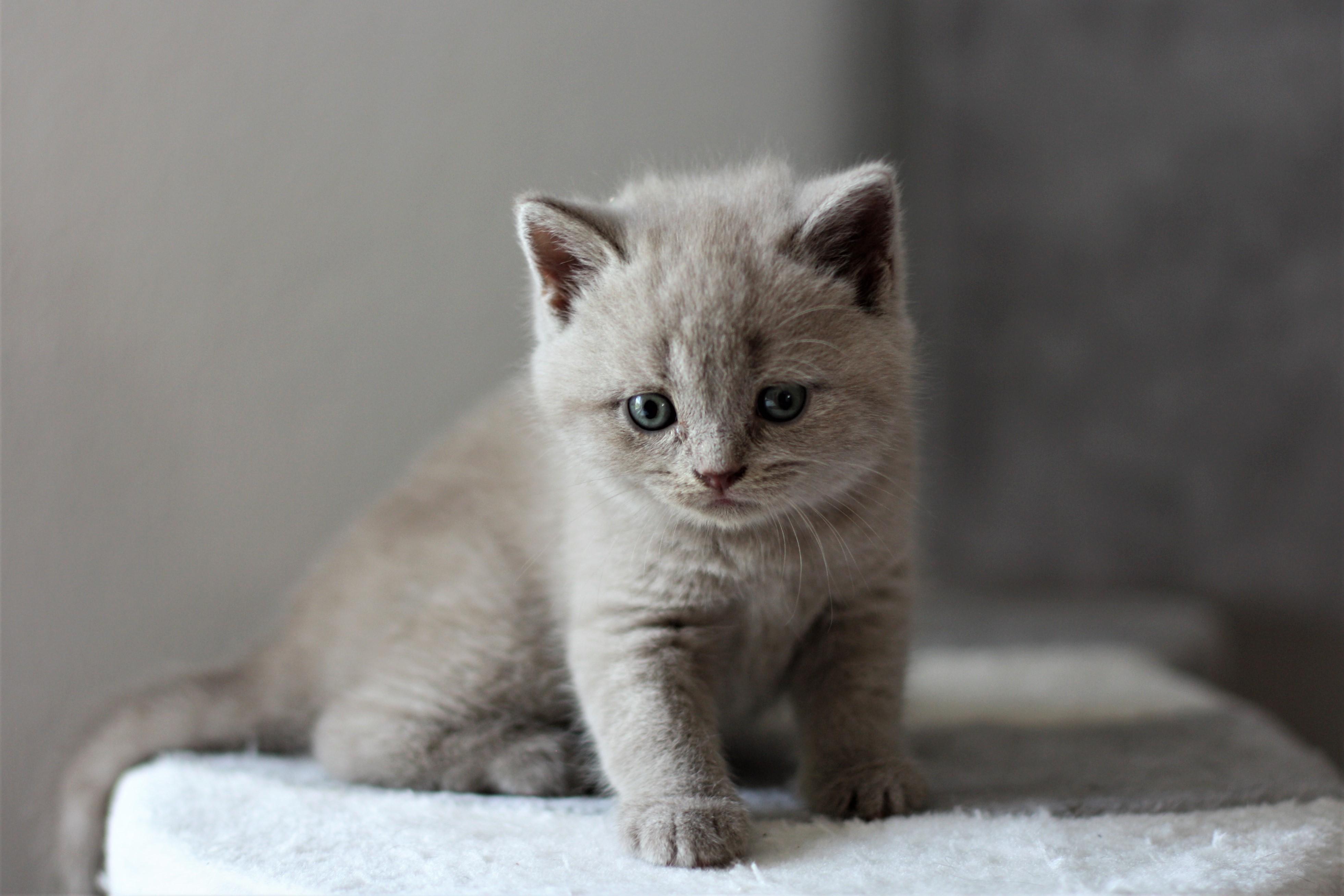 almiras kitten (2)