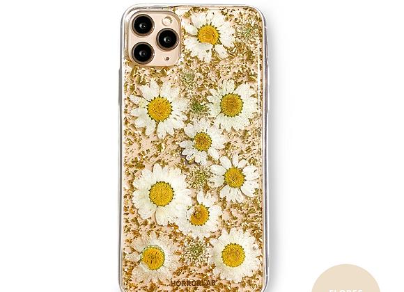 Daisy Day 💛 - Seeds of Sun