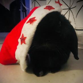 Un Noël sans danger pour nos Lapins !