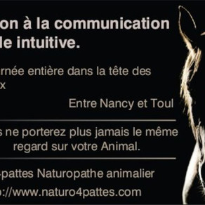 Journée d'initiation à la communication animale intuitive.