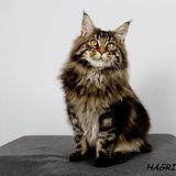 HAGRID 2-.jpg