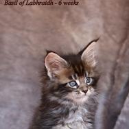 Basil of Labhraidh (9).png