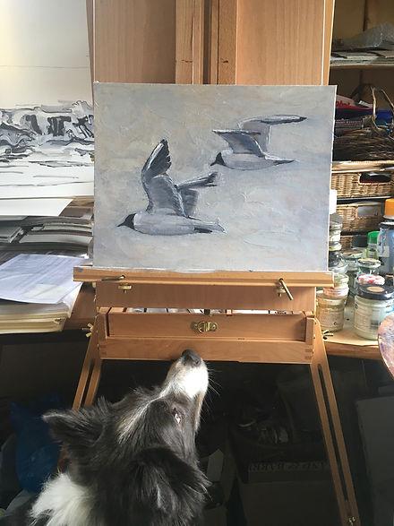 Black headed gulls.jpg