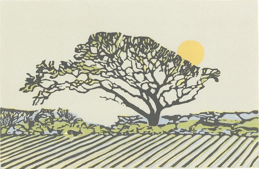 The walker's tree