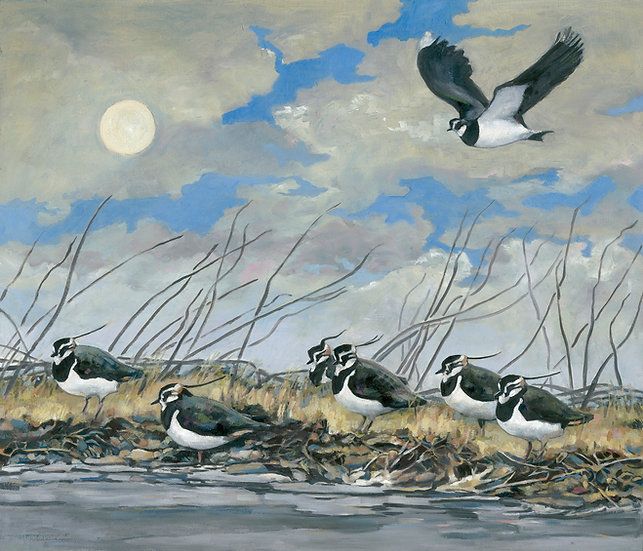 'Evening lapwings' Large Unframed Signed Limited Edition print