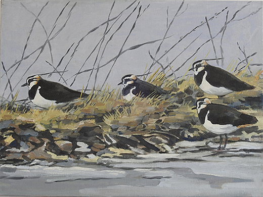 Resting Lapwings