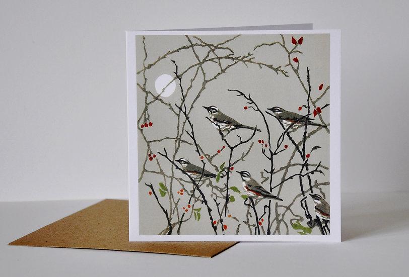 Evening redwings