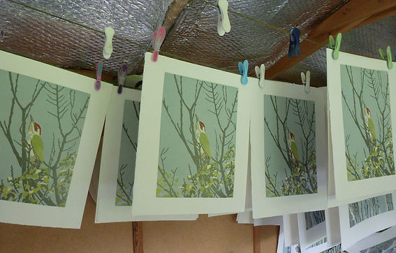 Green woodpecker hanging.jpg