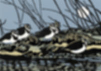 Lapwings.jpg