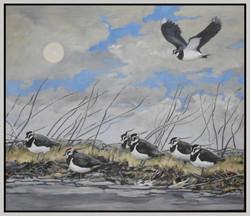 Evening lapwings