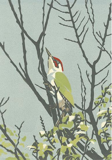 The green woodpecker