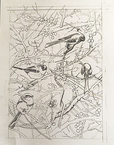 Long tailed tits sketch.jpg