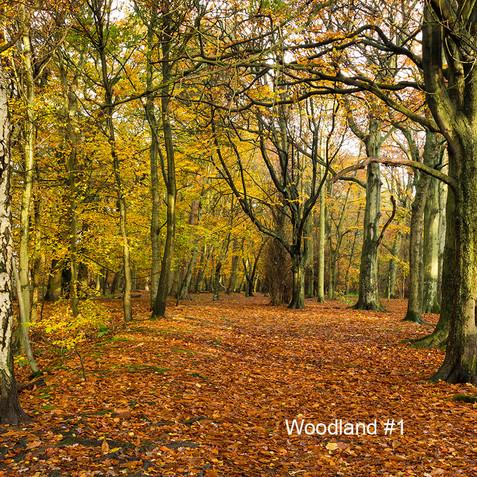 Woodland #1.jpg