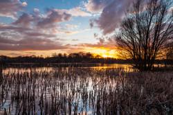 Arcot Pond