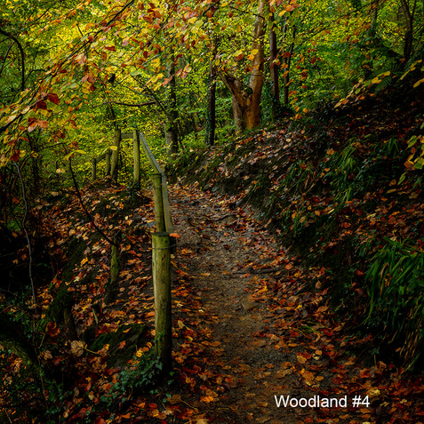 Woodland #4.jpg