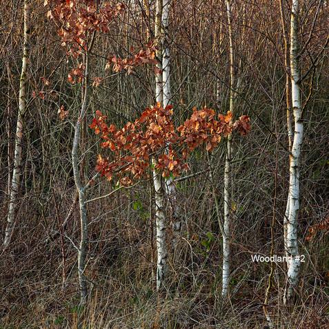 Woodland #2.jpg