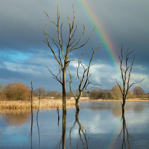 Arcot Pond #2.jpg