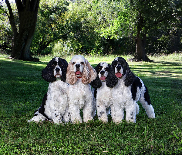 Severs Dogs ok.jpg