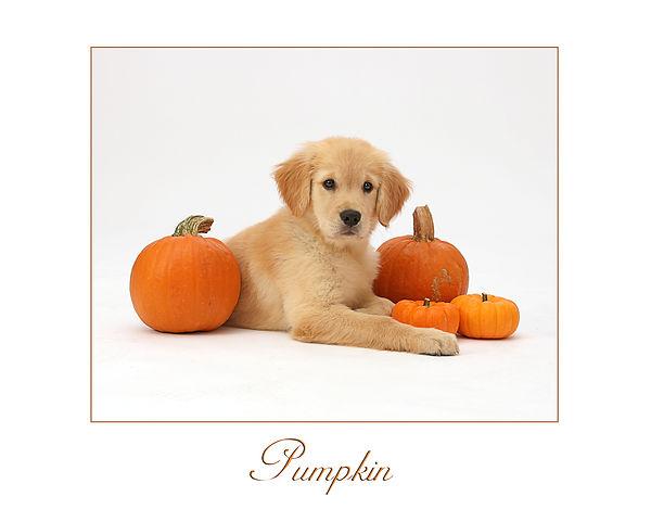 Dog Pumpkin mod.jpg
