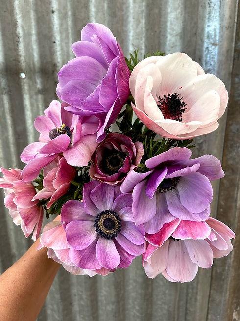 Anemone Pastel.jpg