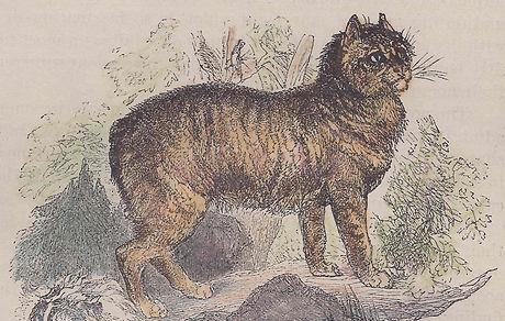 manx-cat-stylized-1885.jpg