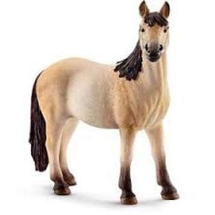 Giumenta Mustang