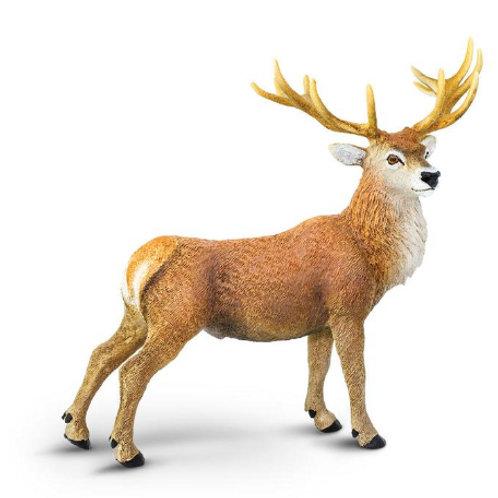 Cervo rosso