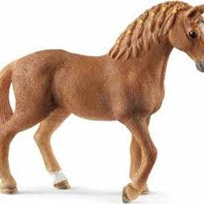 Giumenta Quarter Horse