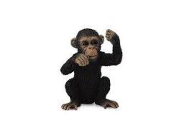 Scimpanzé cucciolo che pensa