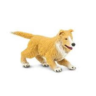 Cane Collie cucciolo