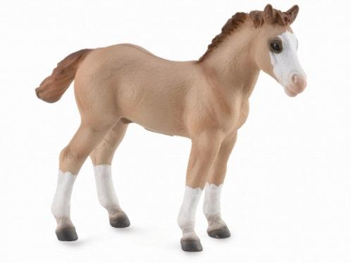 Puledro Quarter Horse Rosso