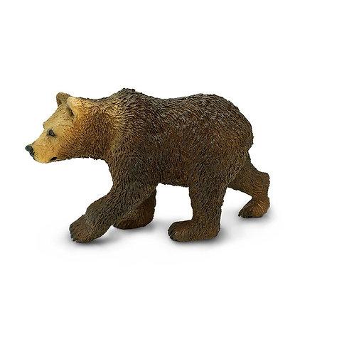 Orso grizzly cucciolo