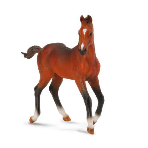 Puledro Quarter HorseBaio
