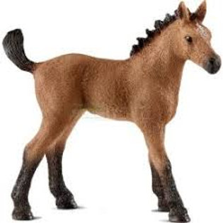 Puledro Quarter Horse