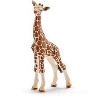 Giraffa cucciolo