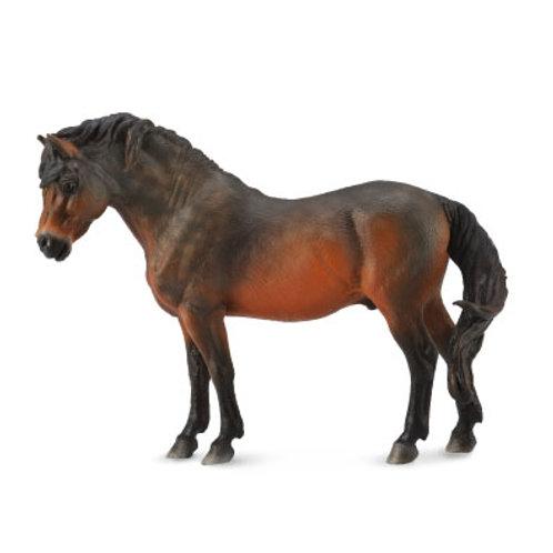 Pony Dartmoor baio
