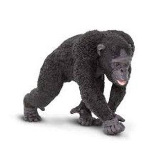 Scimpanzé maschio