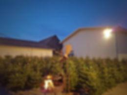 Weihnachtsbaum-allin.jpg