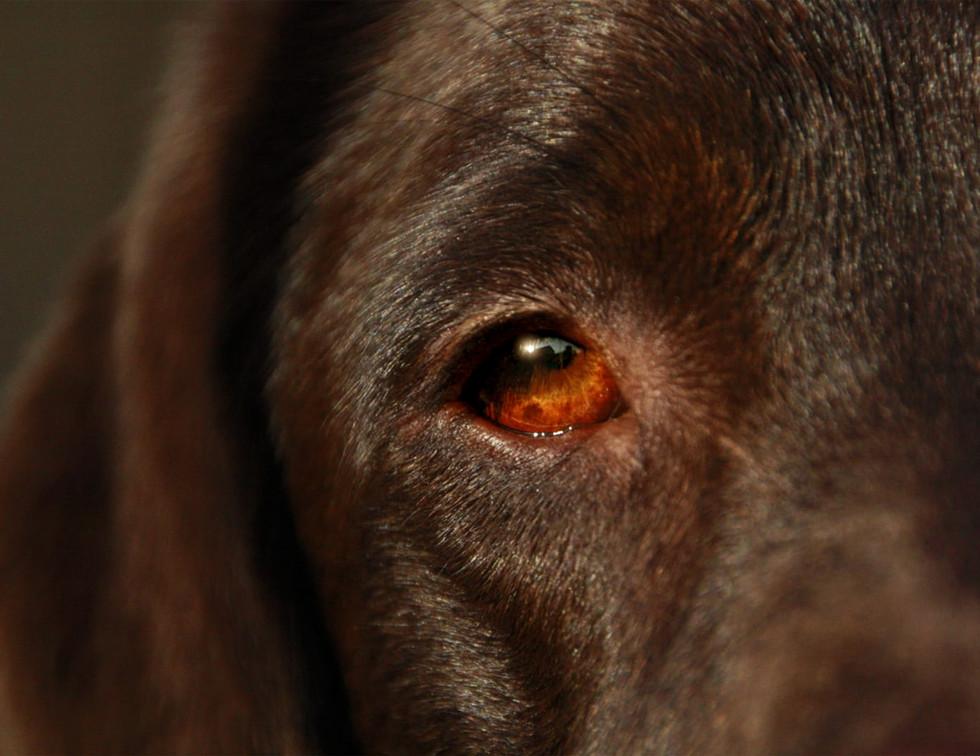 DOG-FACE-1.jpg