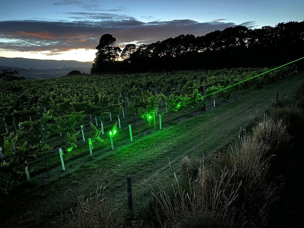 laser beam at dusk over vineyard